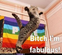 gaycat